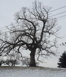 fav_tree
